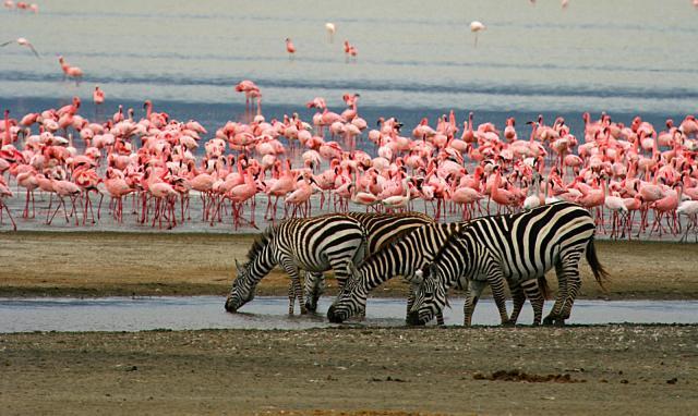 pf4-4 safari kenya e tanzania 7-8 giorni SAFARI DA 7-8 GIORNI pf4 4