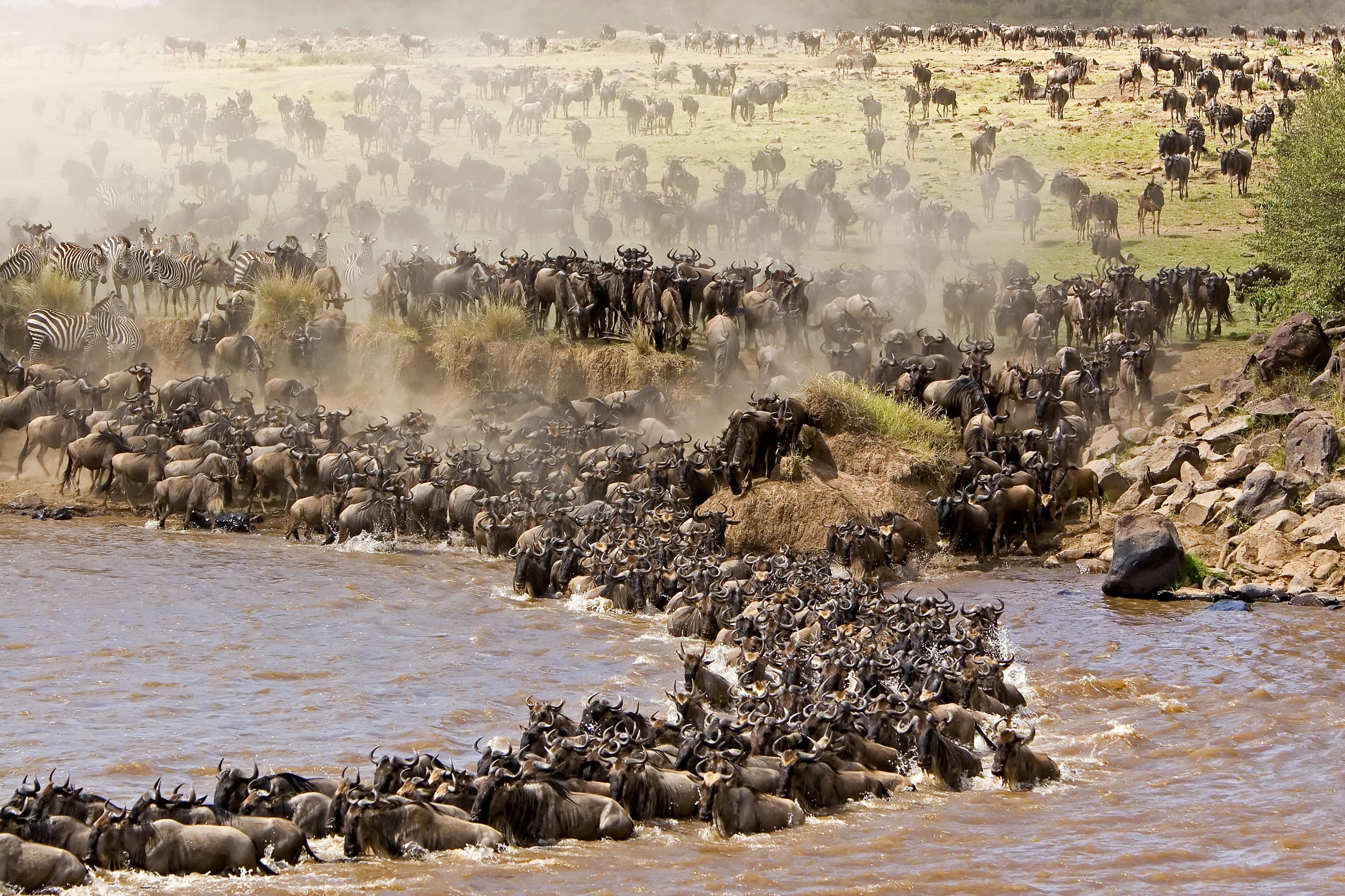 Heritage-Migration-2 riserva masai mara Riserva Masai Mara Heritage Migration 2