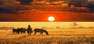 safari itinerari