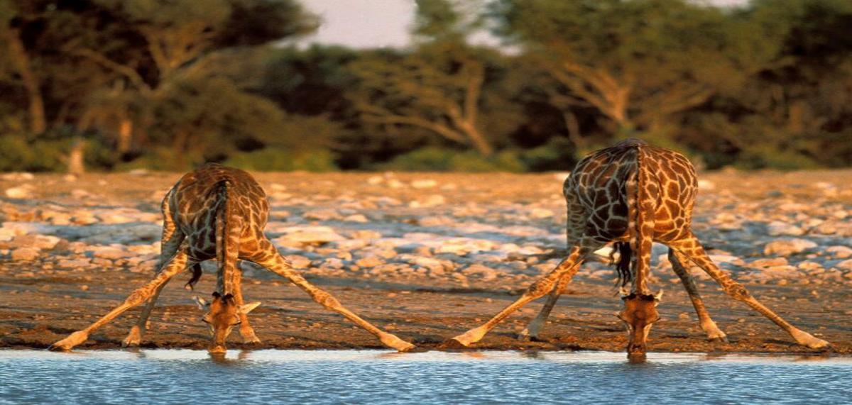 8 giorni safari in tanzania