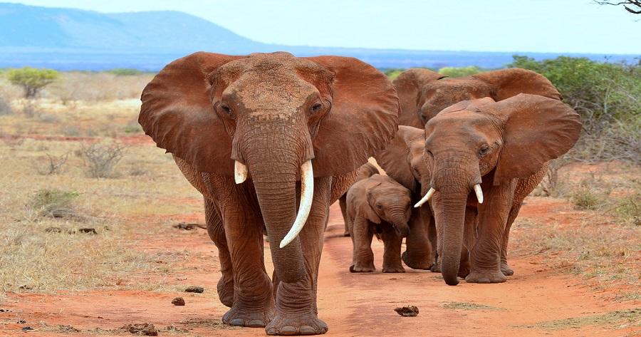 8123451988_005709a621_b 2 giorni safari, riserva ngutuni e tsavo est 2 Giorni - Safari Riserva Ngutuni e Tsavo Est 8123451988 005709a621 b