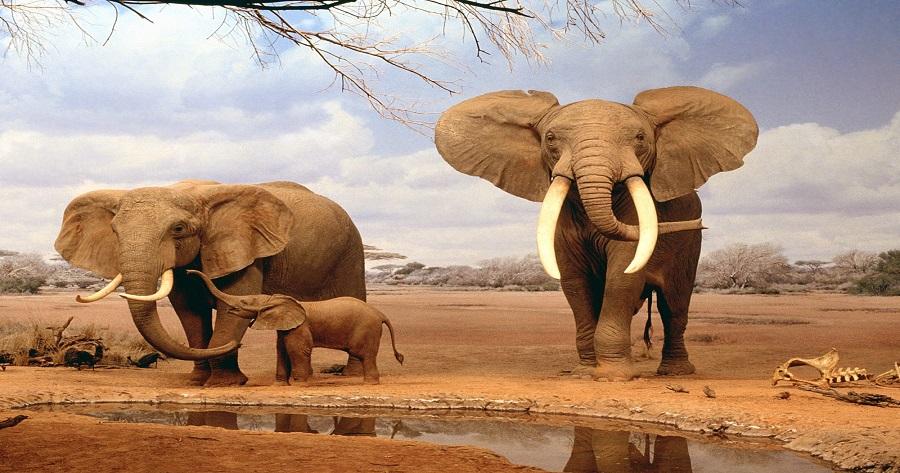 elephants-normal safari da 1-2 giorni SAFARI DA 1-2 GIORNI elephants normal