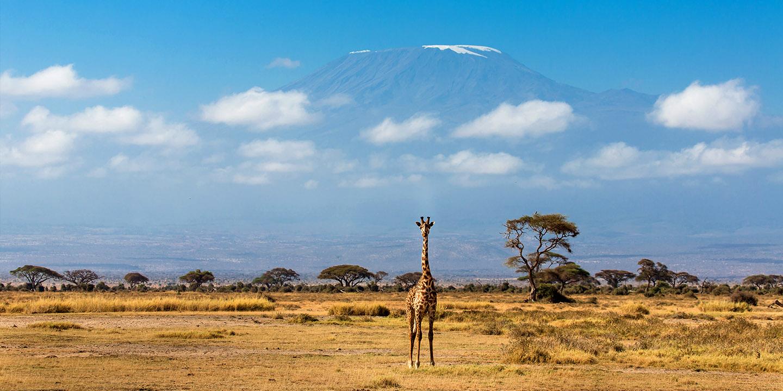154701530 amboseli 2 parco amboseli Parco Amboseli 154701530 amboseli 2