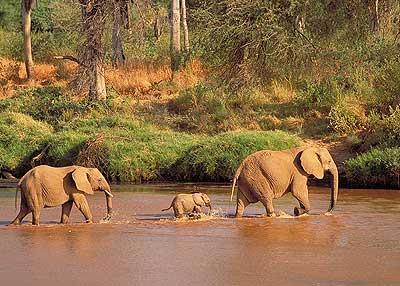 1 giorno e mezzo safari tsavo est 1 Giorno e mezzo - Safari Tsavo est dimage1728 tsavo 2