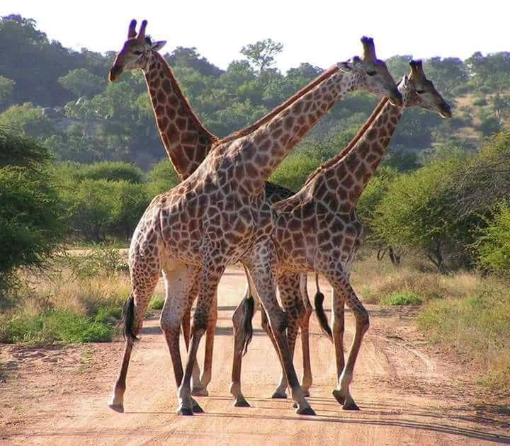 1 giorno e mezzo safari tsavo est 1 Giorno e mezzo - Safari Tsavo est FB IMG 15299502374527435
