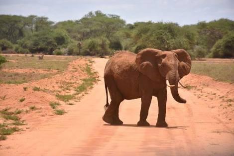 2 giorni safari, riserva ngutuni e tsavo est 2 Giorni - Safari Riserva Ngutuni e Tsavo Est Ndovu