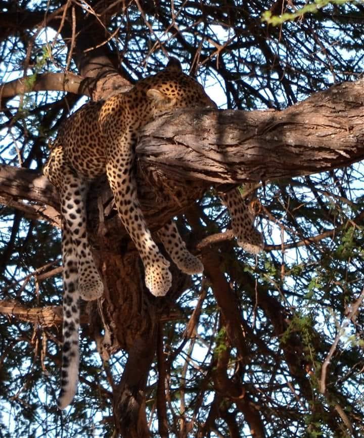 3 giorni safari, masai mara in aereo da malindi 3 Giorni - Safari Masai Mara in aereo da Malindi cheetah