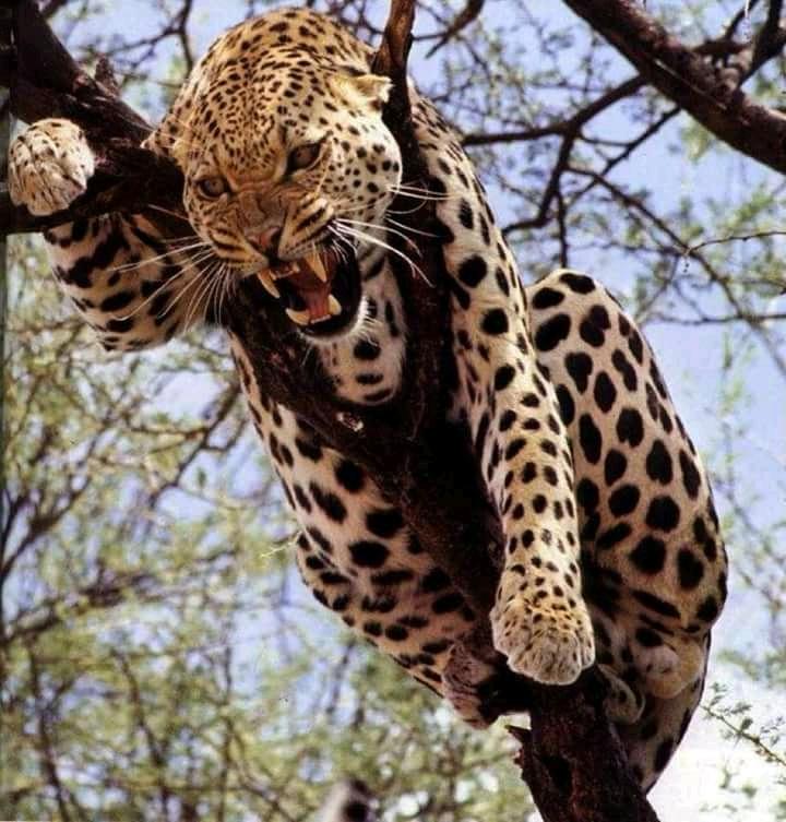 4 giorni 3 notti safari 4 Giorni - Safari Masai Mara e Lago Nakuru leo 2