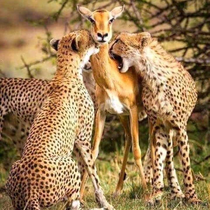 7 giorni safari 7 Giorni - Safari in Kenya leo