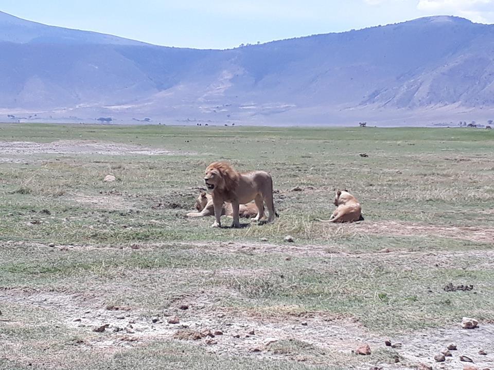 safari di 6 giorni in tanzania 6 Giorni - Safari in tanzania lione