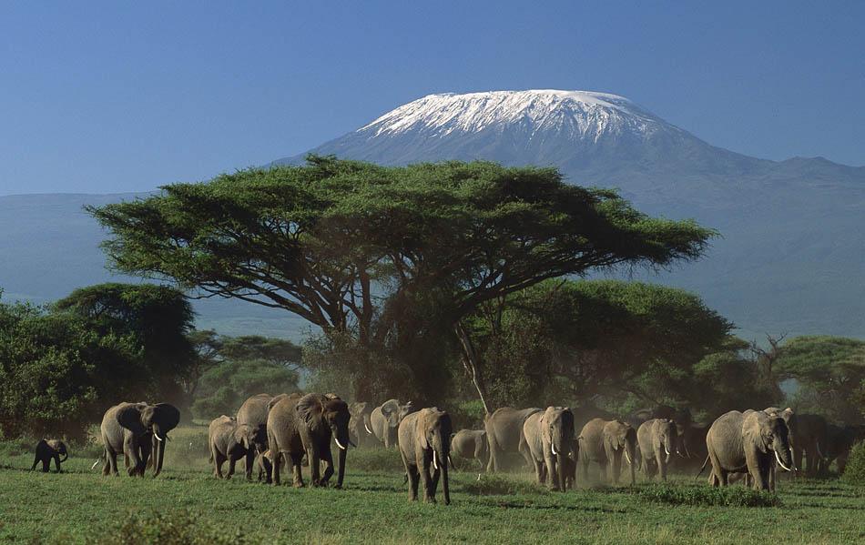 amboseli-national-parkel_1-2 parco amboseli Parco Amboseli amboseli national parkel 1